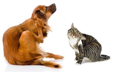 Prurito nel cane e nel gatto